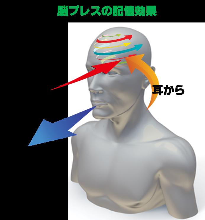 4.脳プレスの3知覚記憶効果